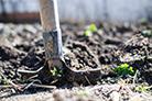 植树节的起源与定义以及中外植树节…