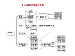 高中生物必修三知识框架图.pdf