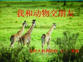 2012《我和动物交朋友》优秀课件.ppt