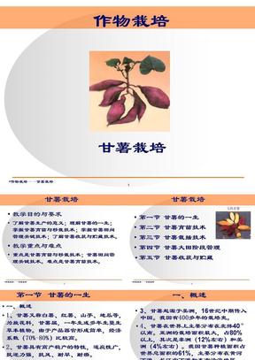 红薯(甘薯)生产技术.ppt