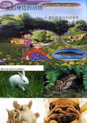 我们身边的动物.ppt