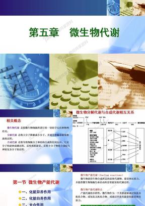 微生物学总复习(下).ppt