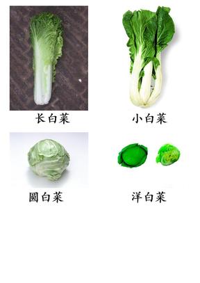 蔬菜图片大全.doc