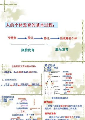 3.1体内受精和早期胚胎发育2.ppt