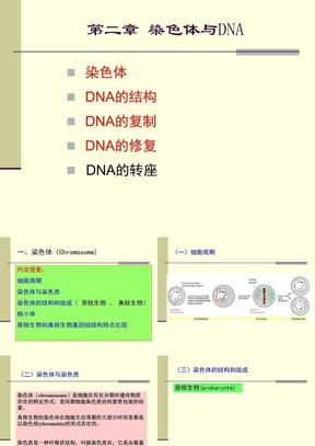 扬州大学《现代分子生物学》2-染色体与DNA.ppt