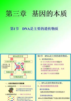 DNA是主要的遗传物质.ppt