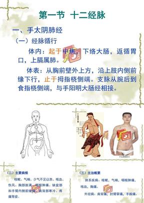 针灸_穴位_经络_介绍——手太阴肺经.ppt