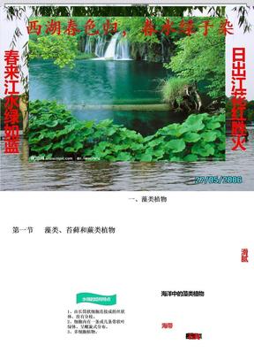 藻类、苔藓和蕨类植物.ppt