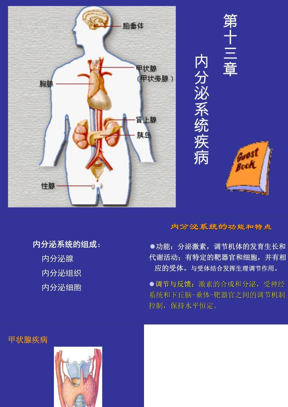 内分泌系统疾病.ppt