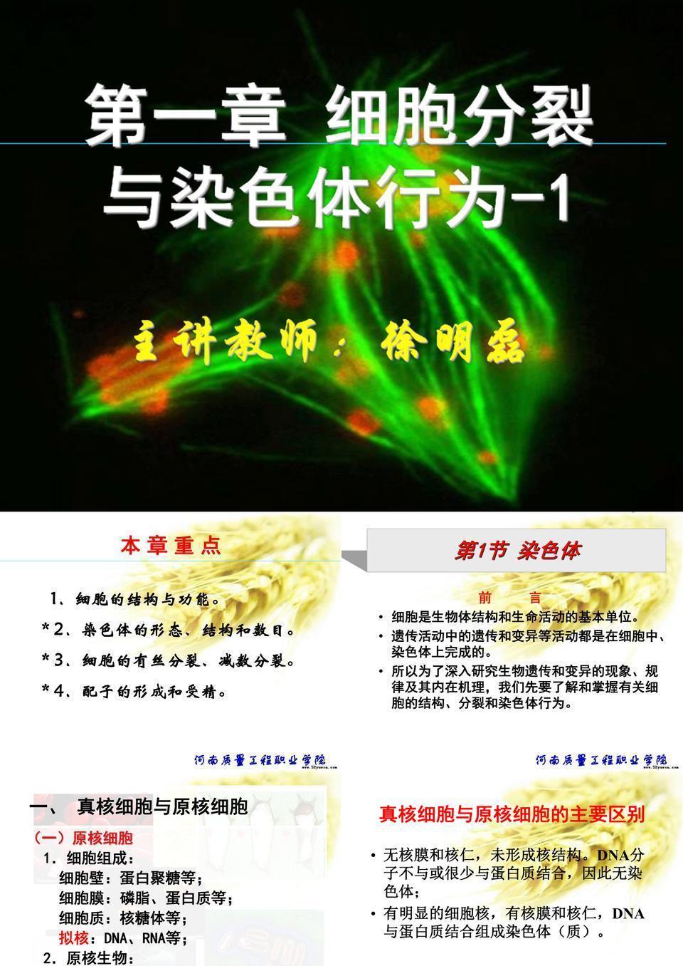 1第一章  细胞分裂与染色体行为 1.ppt