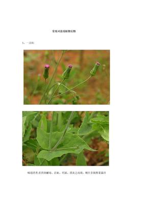 常见可食用植物 实物图.doc