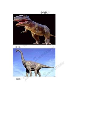 恐龙图片.doc