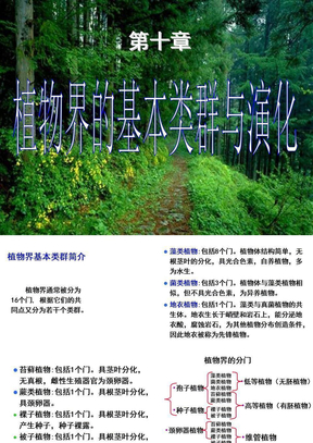 植物生物学课件-第十章第一节低等植物.ppt