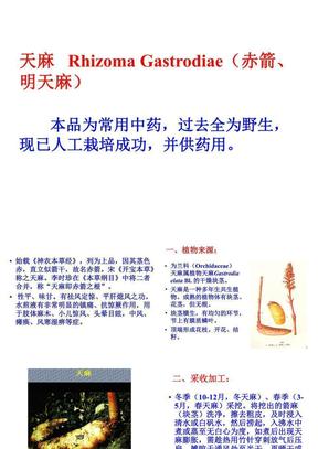 中药鉴定学天麻-JC精心整理.ppt