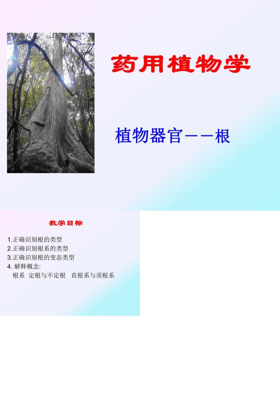 [药用植物学课件]-3植物器官根.ppt