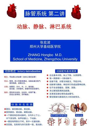 动脉、静脉、淋巴系统.ppt