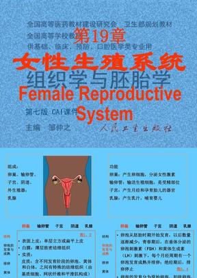 19女性生殖系统.ppt