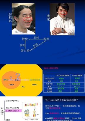 基因的表达.ppt