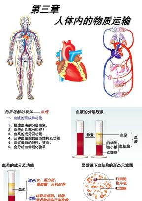 七年级下册生物课件——人体内的物质运输.ppt