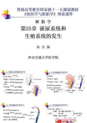 第25章泌尿系统和生殖系统的发生.ppt