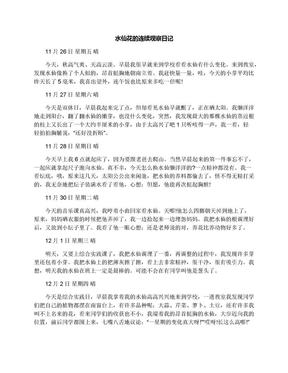 水仙花的连续观察日记.docx