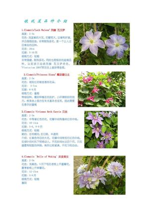 铁线莲品种介绍.pdf