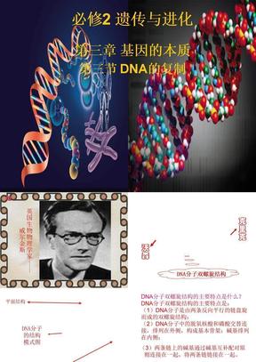 DNA的复制1.ppt