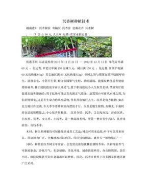 沉香树种植技术.doc