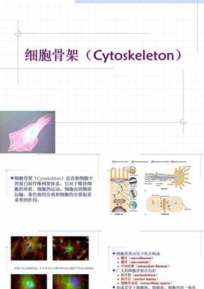 7.细胞骨架.ppt