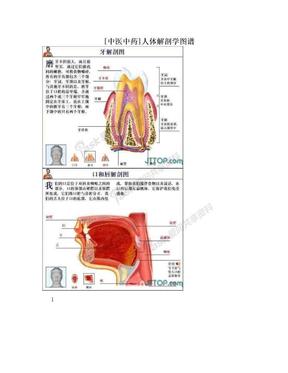 [中医中药]人体解剖学图谱.doc
