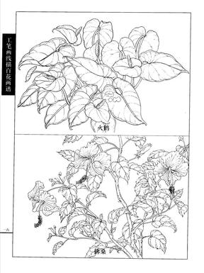 美术全集-工笔画线描百花画谱.秋冬篇02.pdf