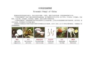 中国食用菌图谱.doc