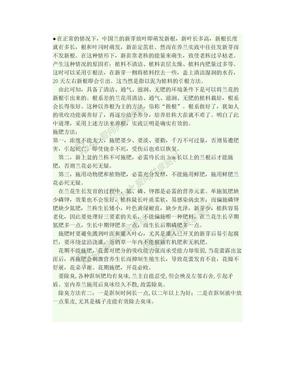兰花如何养根,促芽,长苗.doc