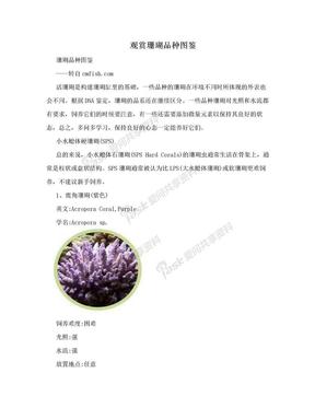观赏珊瑚品种图鉴.doc
