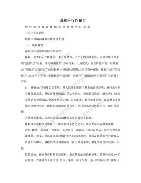 藤椒可行性报告.doc