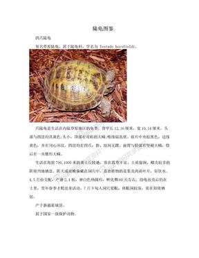 陆龟图鉴.doc