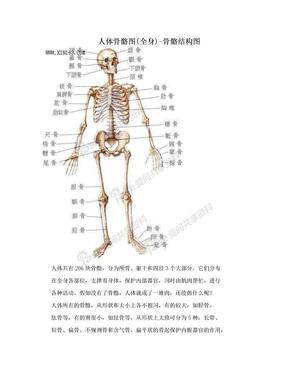 人体骨骼图(全身)-骨骼结构图.doc