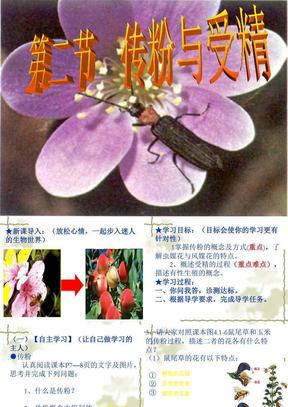 生物:4.1.2《传粉与受精》课件2(济南版八年级上).ppt