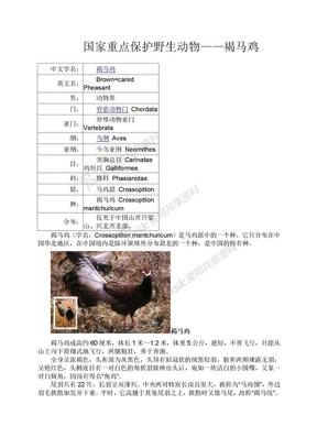 国家重点保护野生动物——褐马鸡.doc