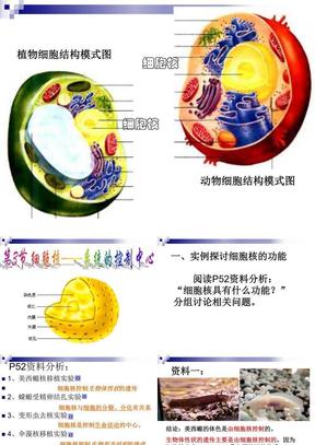 3.3细胞核(公开课).ppt