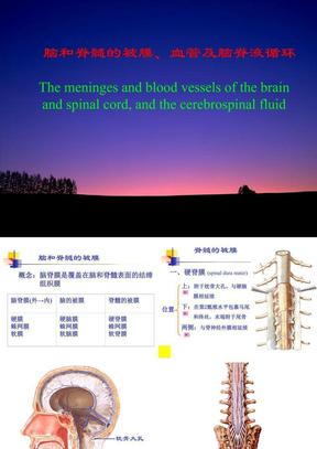 脑和脊髓的血管、被膜、脑脊液循环(人体解剖学).ppt