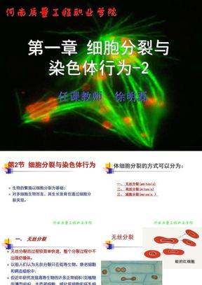 2第一章  细胞分裂与染色体行为2.ppt