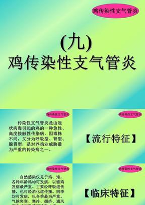 09传染性支气管炎.ppt