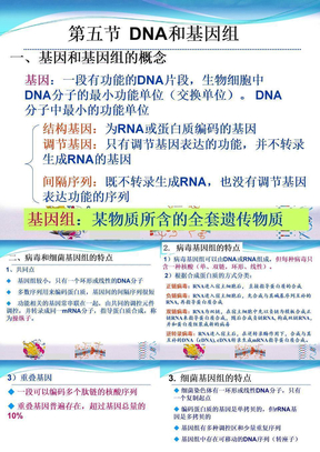 RNA的结构和功能.ppt