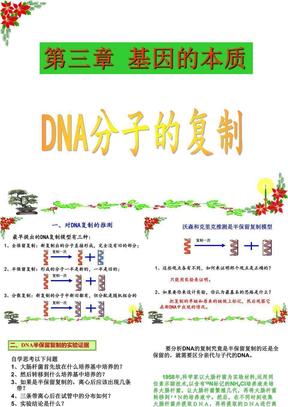 [课件]第08课DNA分子的复制.ppt