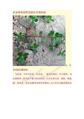 农家地里的野菜能治多种疾病.doc