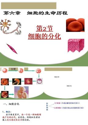 细胞的分化.ppt