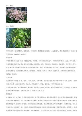 室内观叶、观花植物(4).doc