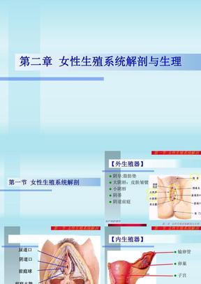 第02章  女性生殖系统解剖与生理.ppt