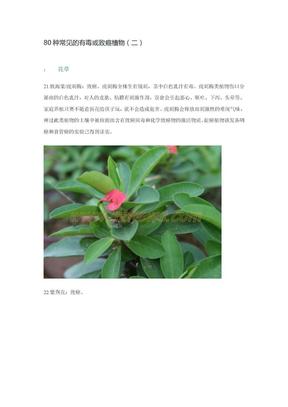 80种常见的有毒或致癌植物2.doc